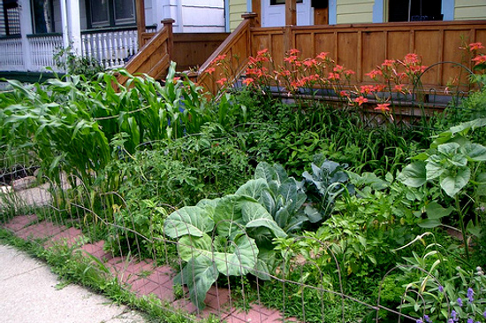 Creating front yard gardens food renegade for Creating a vegetable garden